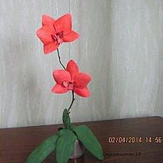 орхидея(фо