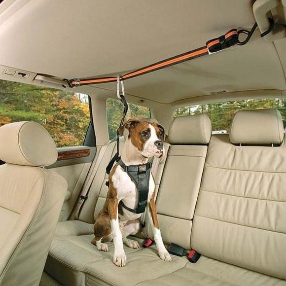 Для перевозки собаки в автомобиле