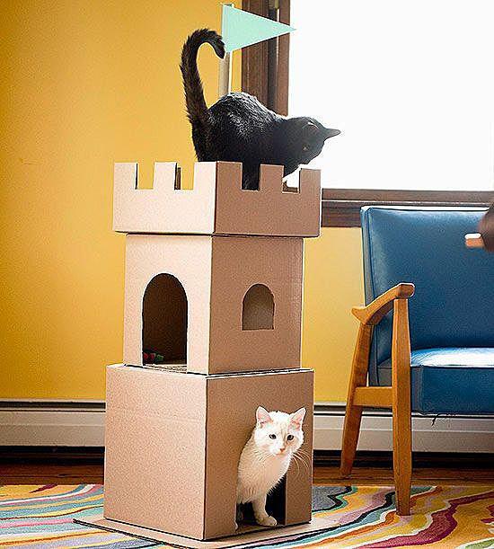 Замок для кота