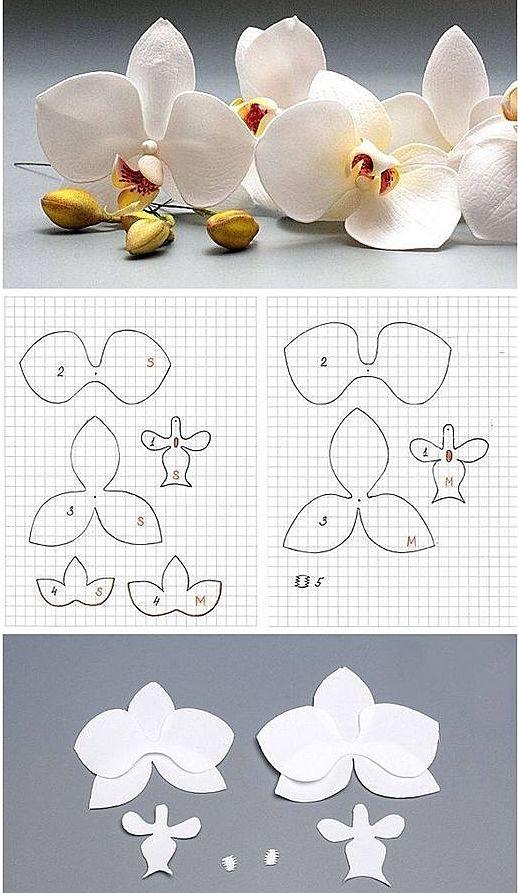 Нежные орхидеи