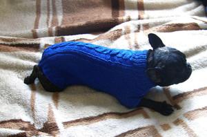 Яркий свитер для собаки