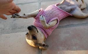 Ажурный свитер для собаки