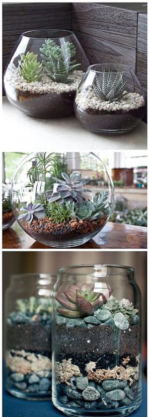 Растения в аквариумах