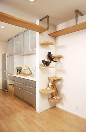 Тренажоры для котов
