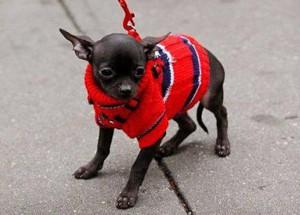 Красный свитер для собаки