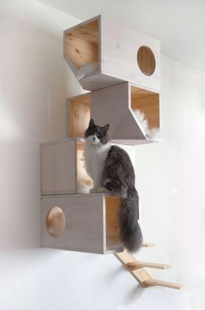 Где бы полазить коту