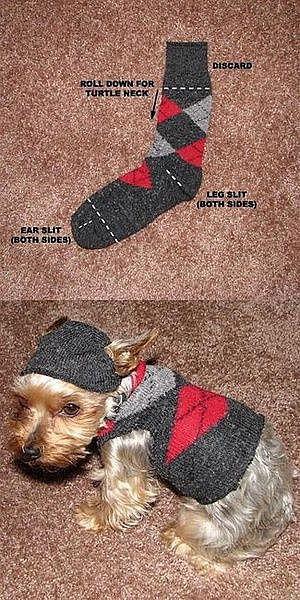Шьем одежду для собак  выкройка