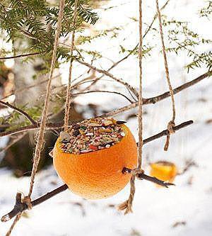 Кормушка из апельсина