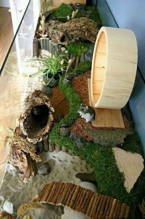 Райский сад для хомяка