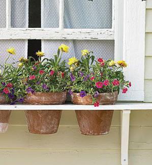 Цветы за окнами