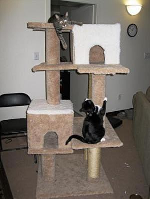 Тренажор для кота