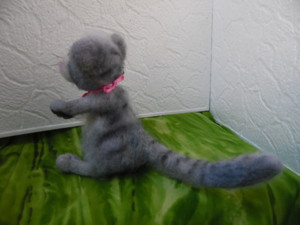 серый коте